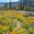 Catalina State Park Tucson Arizona United States