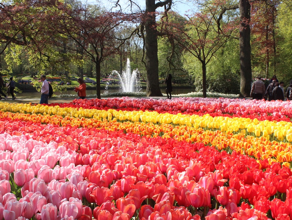 The Netherlands' Majestic Keukenhof Gardens Lisse  The Netherlands