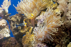 Andros Barrier Reef Expedition
