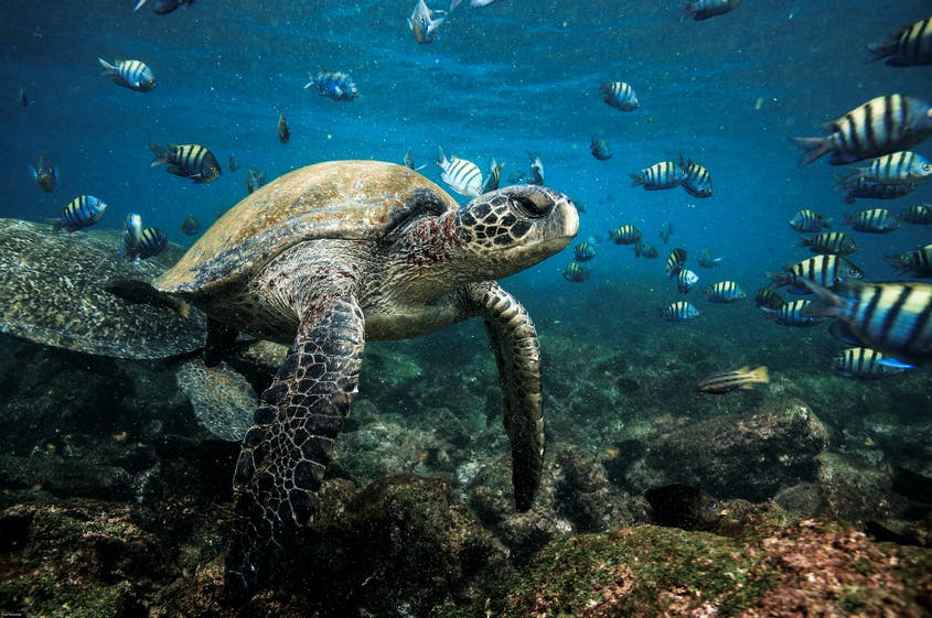 Ecuador's wildlife-filled Galápagos archipelago is now available to vaccinated travelers.