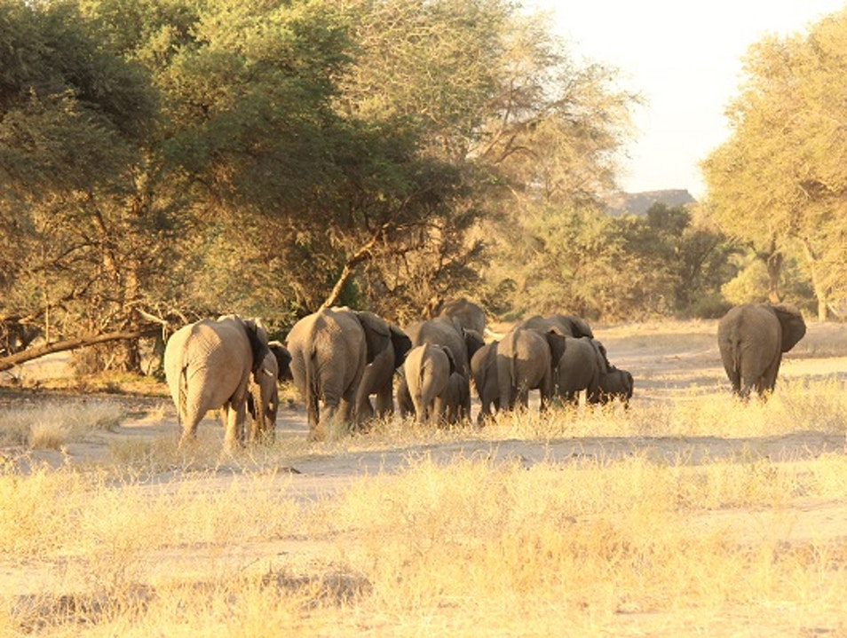 Tracking desert-adapted elephant in Namibia