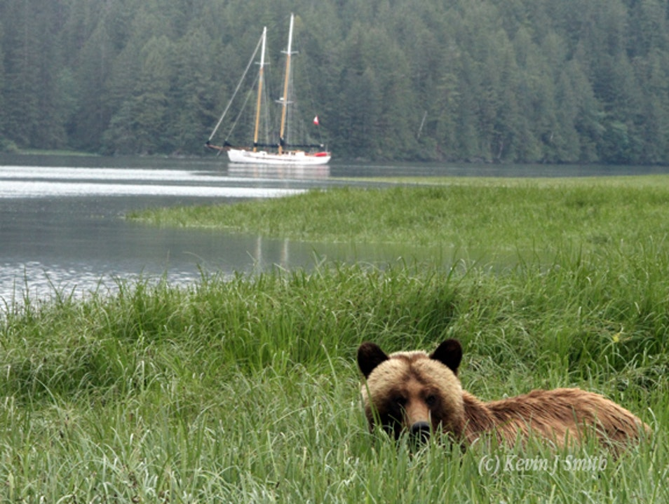 Fjords, bears, whales, rainforest and surprises Kitimat  Canada