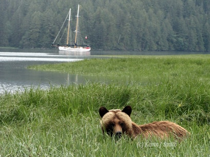 Great Bear Rainforest Kitimat  Canada
