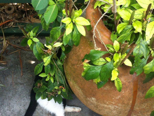 Hidden Hemingway Cat Spotting!