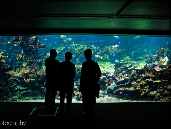 Explore France's Best Aquarium