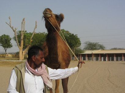 Natural Camel Research Centre Bikaner  India