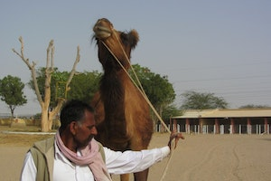 Natural Camel Research Centre