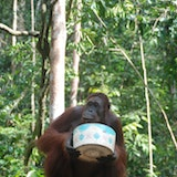 Orangutan Care Center