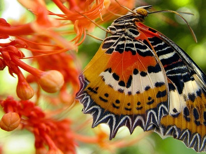Butterfly World Coconut Creek Florida United States