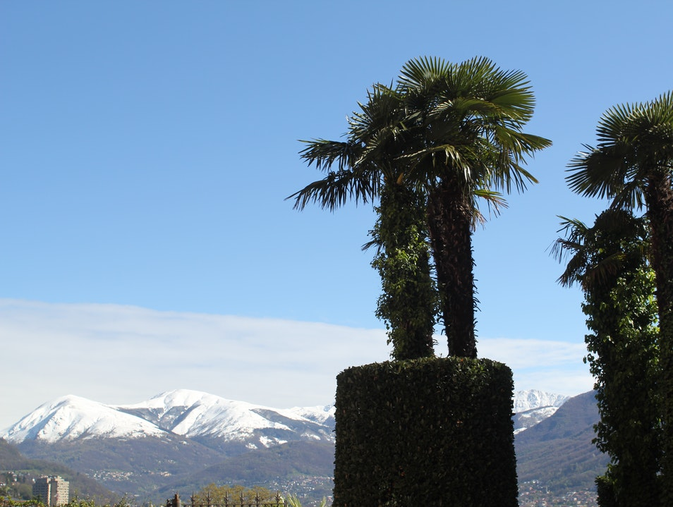 Palm Trees and Snow