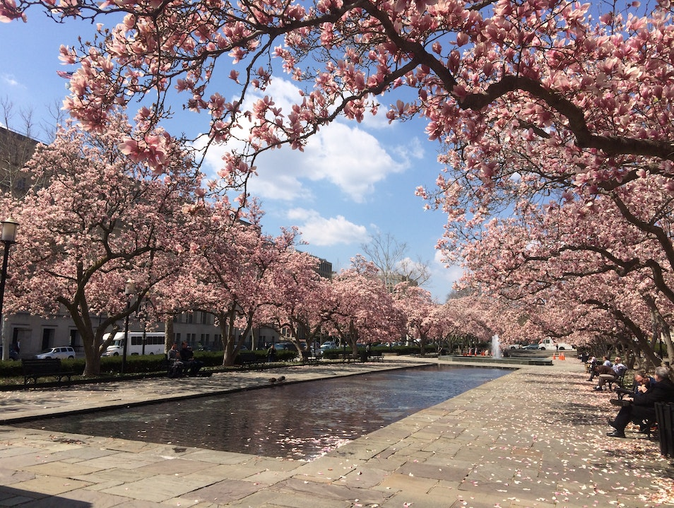 A Cherry Blossom Oasis, Off the Tidal Basin Washington, D.C. District of Columbia United States