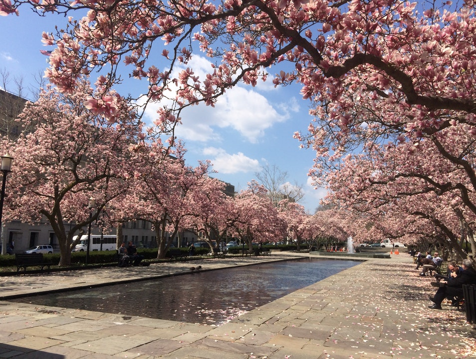 A Cherry Blossom Oasis, Off the Tidal Basin