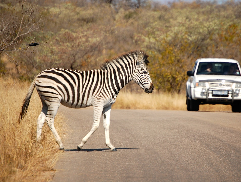 The Road Less Traveled.  Kruger Park  South Africa
