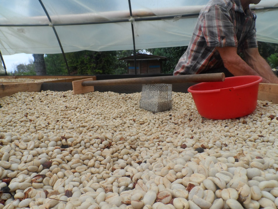 See how the finest coffee in the world is made