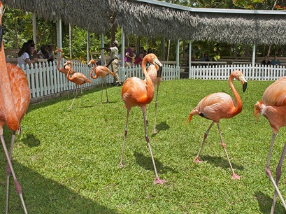 Ardastra Gardens, Zoo & Conservation Centre Nassau  The Bahamas