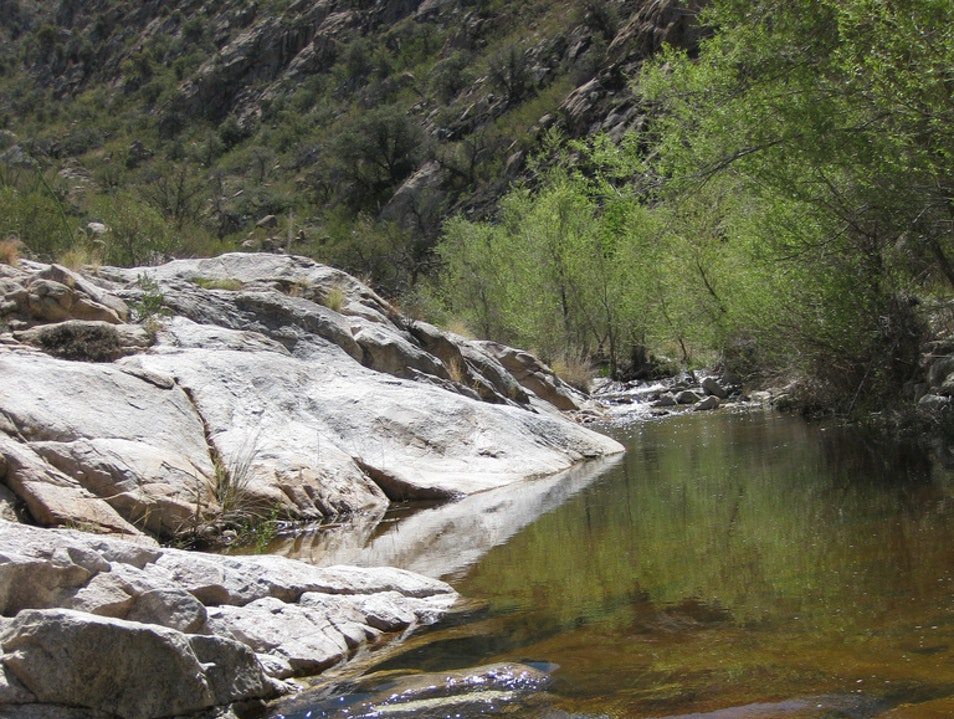 Natural Oasis in the Santa Catalina Mountains Mount Lemmon Arizona United States
