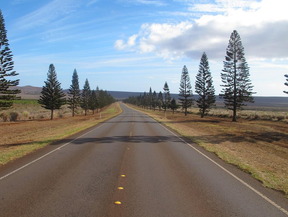 Lana'i Rush Hour Lanai City Hawaii United States
