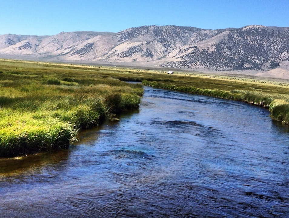 Trout on Owens River.. Mono California United States