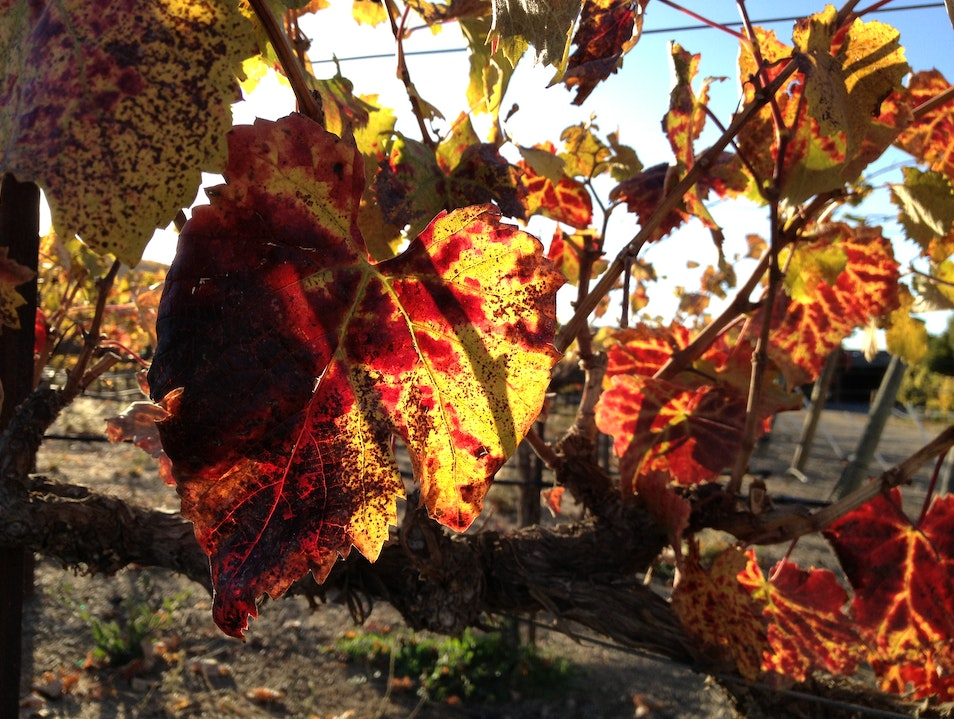 Combining History and Wine Tasting in Livermore Valley