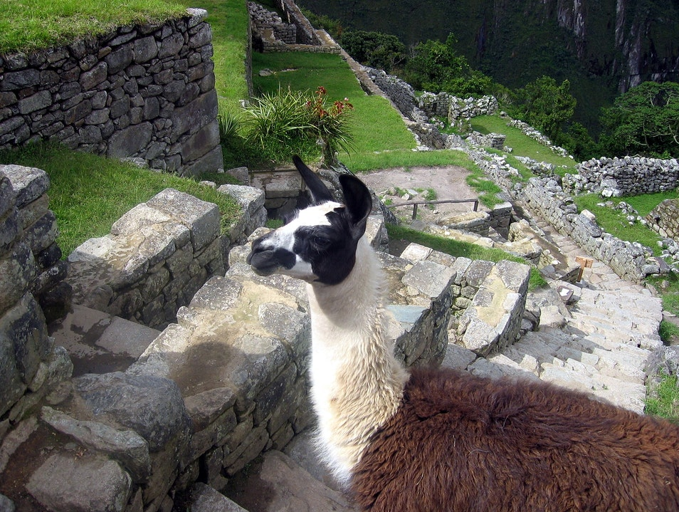 Residents of Machu Picchu Urubamba  Peru