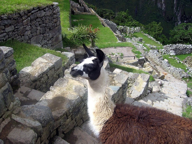 Residents of Machu Picchu