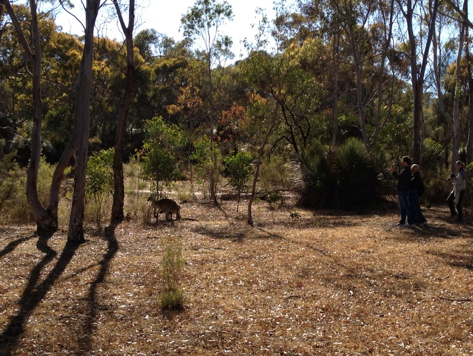Great Place For A Walk and to See Some Roos Tanunda  Australia