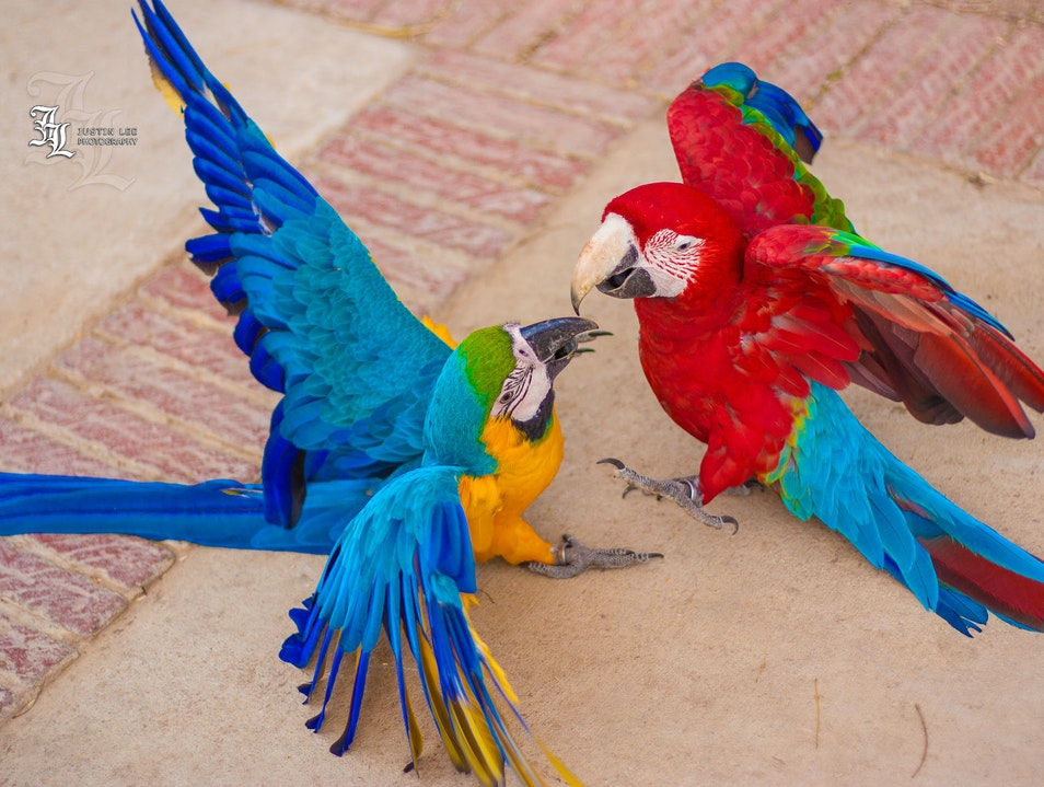 Play With Parrots At Montecasino's Bird Gardens Sandton  South Africa
