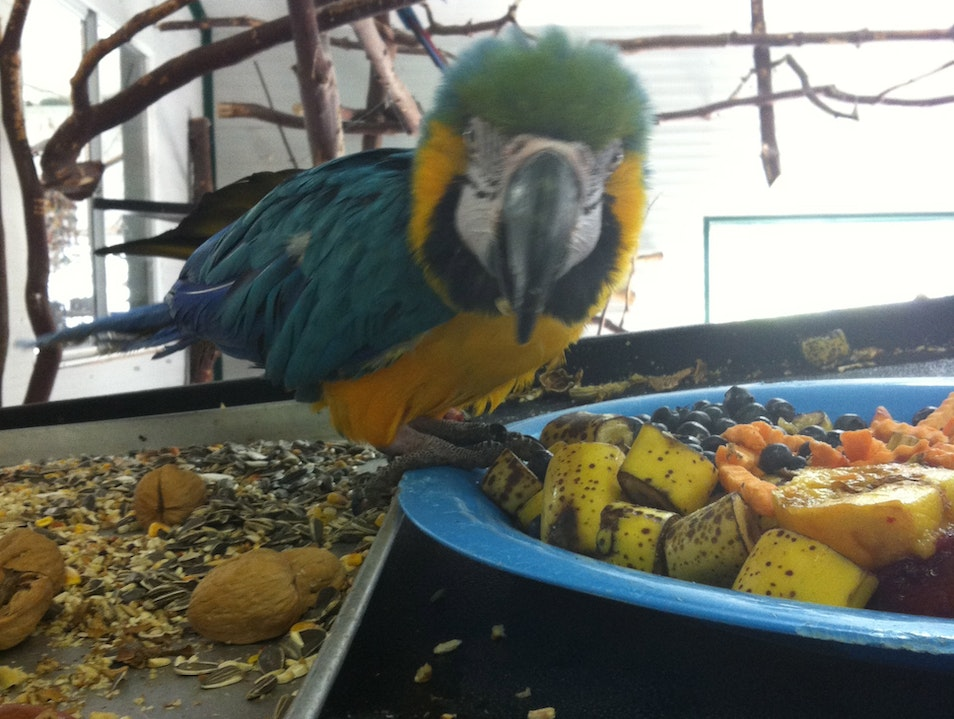World Parrot Refuge In Coombs  Comox Strathcona C  Canada