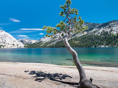 Tenaya Lake Wawona California United States