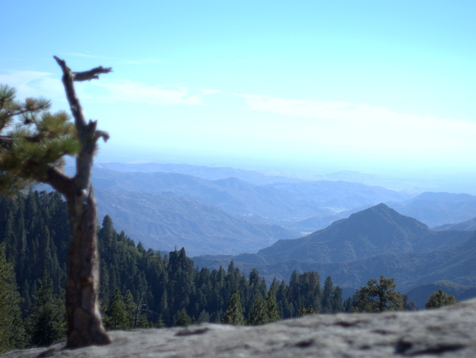 Yosemite and Sequoia & Kings Canyons Kings Canyon National Park California United States