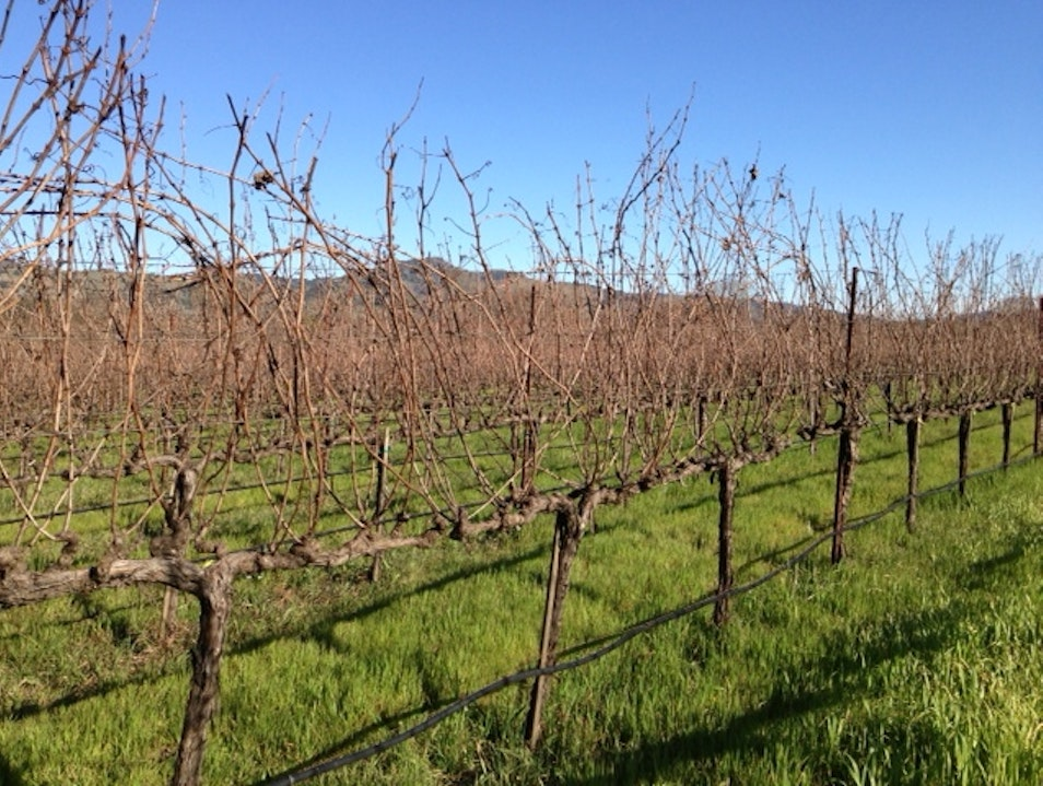 Walking the vineyard in February
