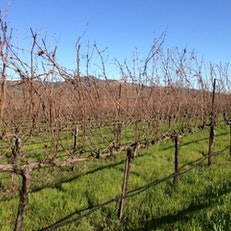 Gamble Family Vineyard