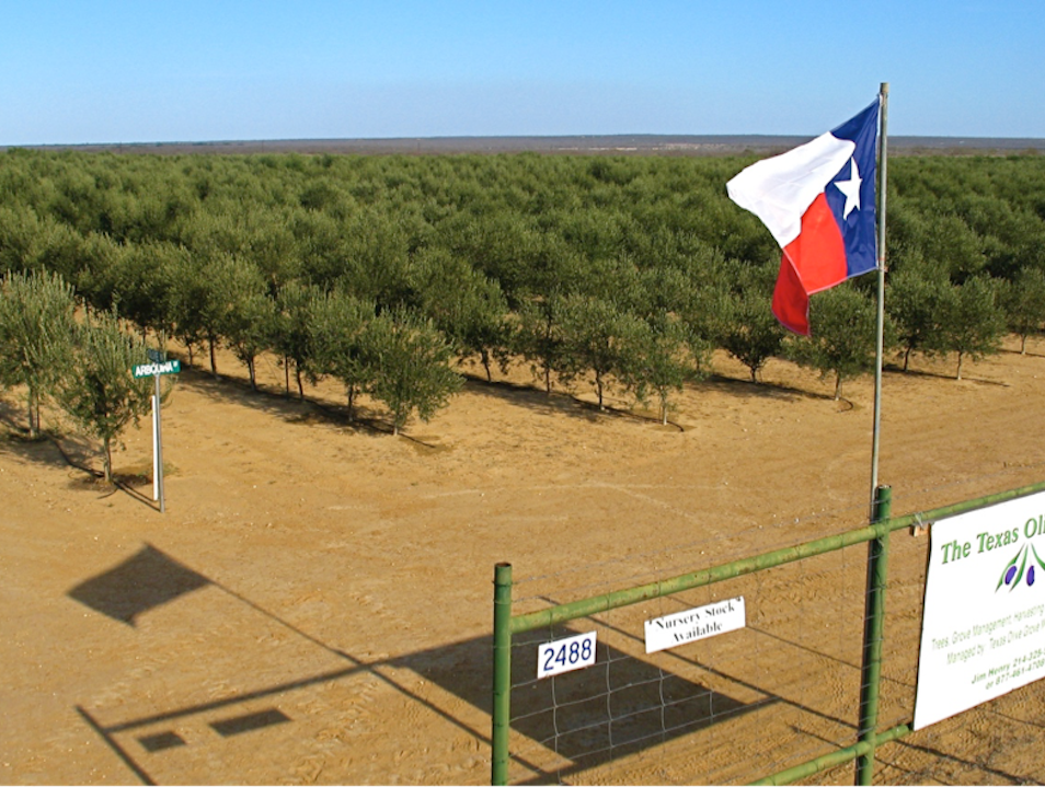 Another Kind of Texas Oil