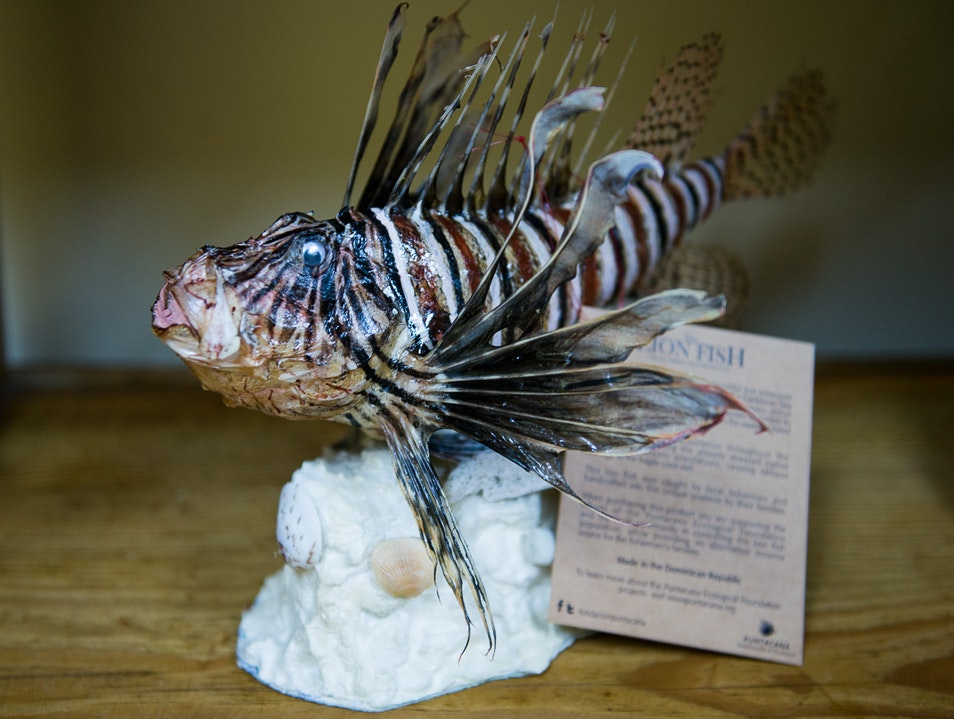 Buy a Stuffed Lionfish