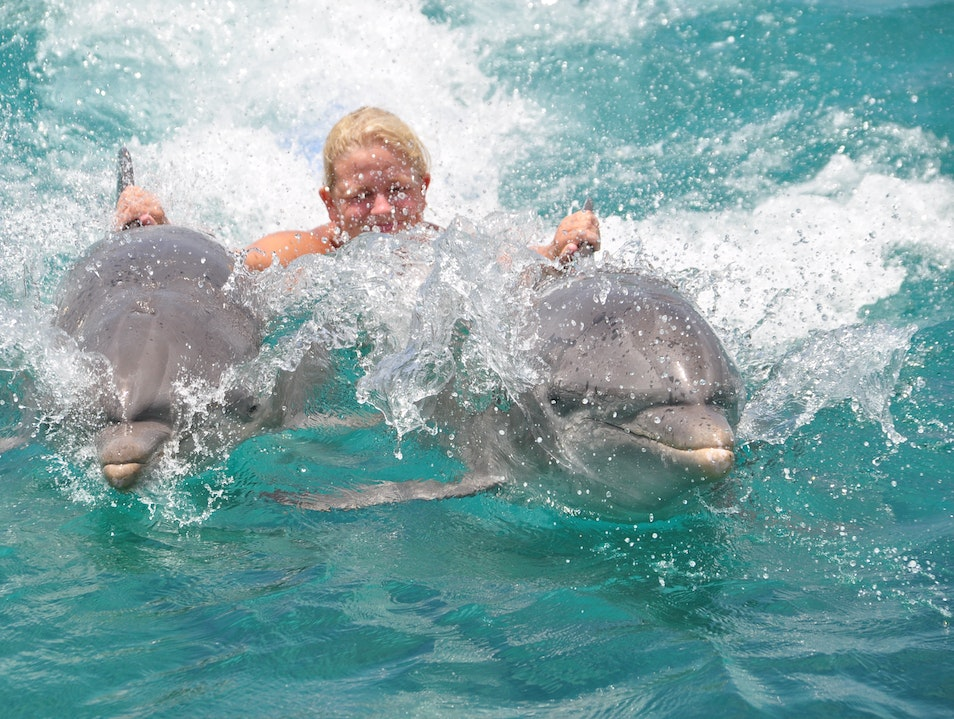 pulled through the water by the dolphins from Sea aquarium