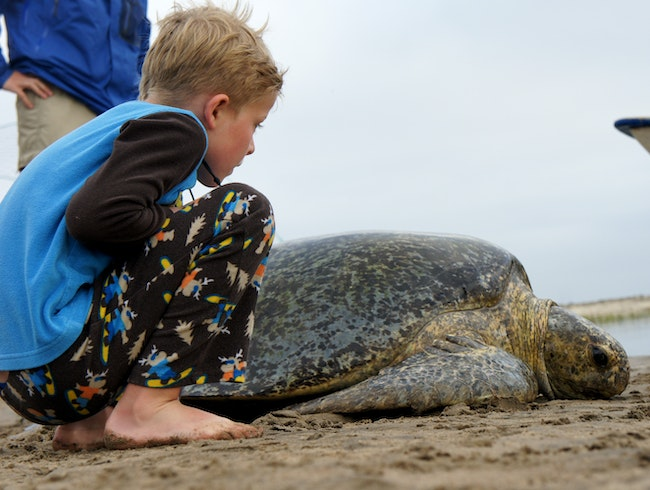 A Sea Turtle Meets a Samuel on Baja's Magdalena Bay.
