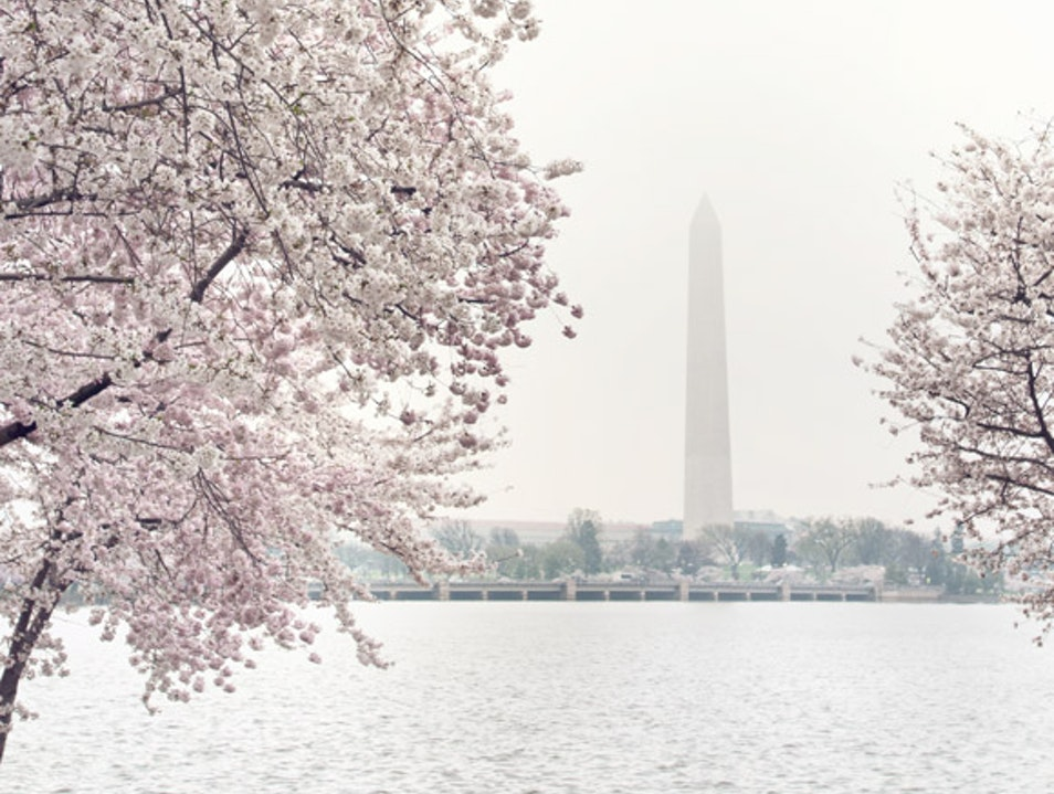Springtime in DC Washington, D.C. District of Columbia United States