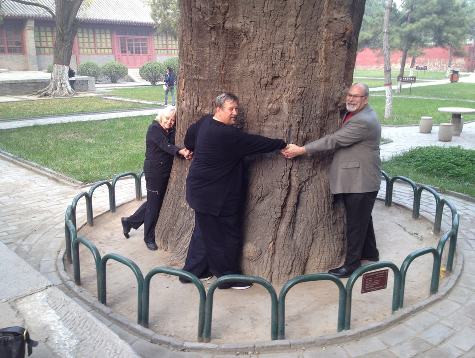 Tree hugging a 1000 year old tree.