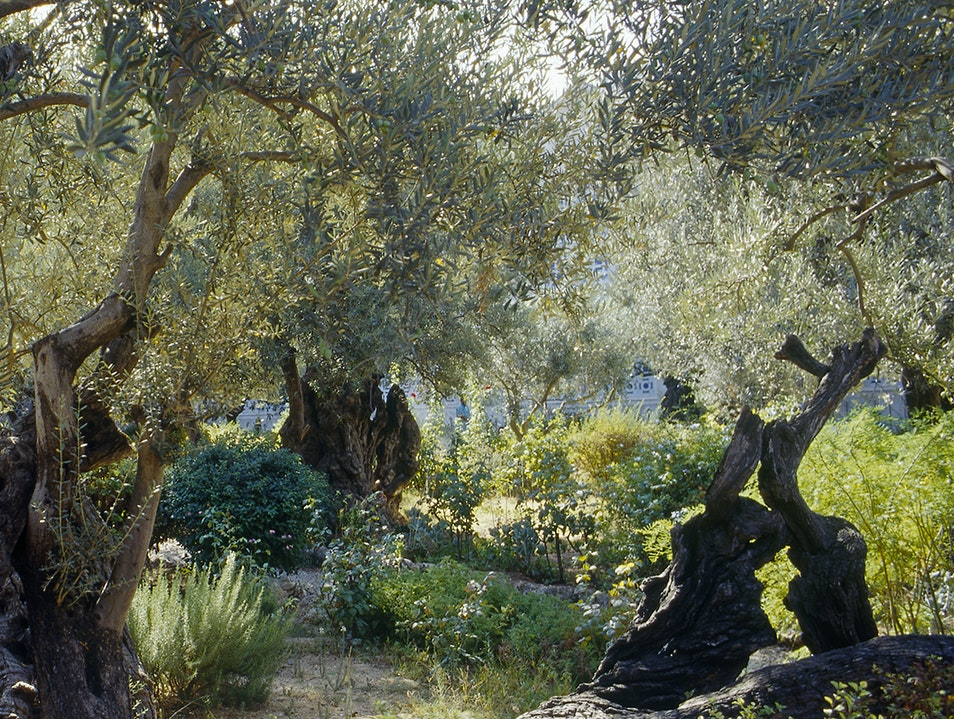 Garden of Gethsemane San Francisco California United States