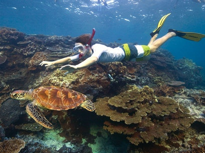 Snorkeling and Scuba Diving Queensland  Australia