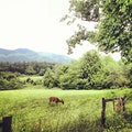 Cades Cove Townsend Tennessee United States
