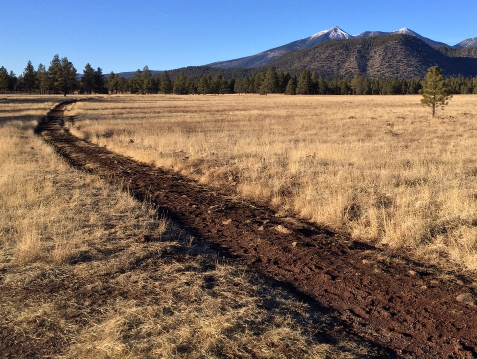 Meadow and mountain--atop an ancient lava flow in Flagstaff Flagstaff Arizona United States