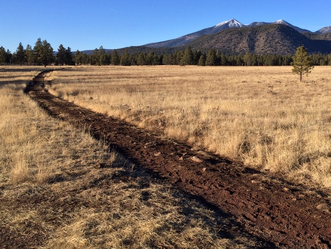 Meadow and mountain--atop an ancient lava flow in Flagstaff