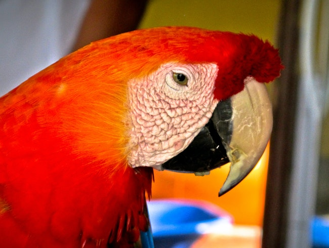 The beautiful macaw - Amazon, Brazil
