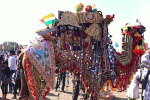 Village Ladera Mela Ground, Bikaner