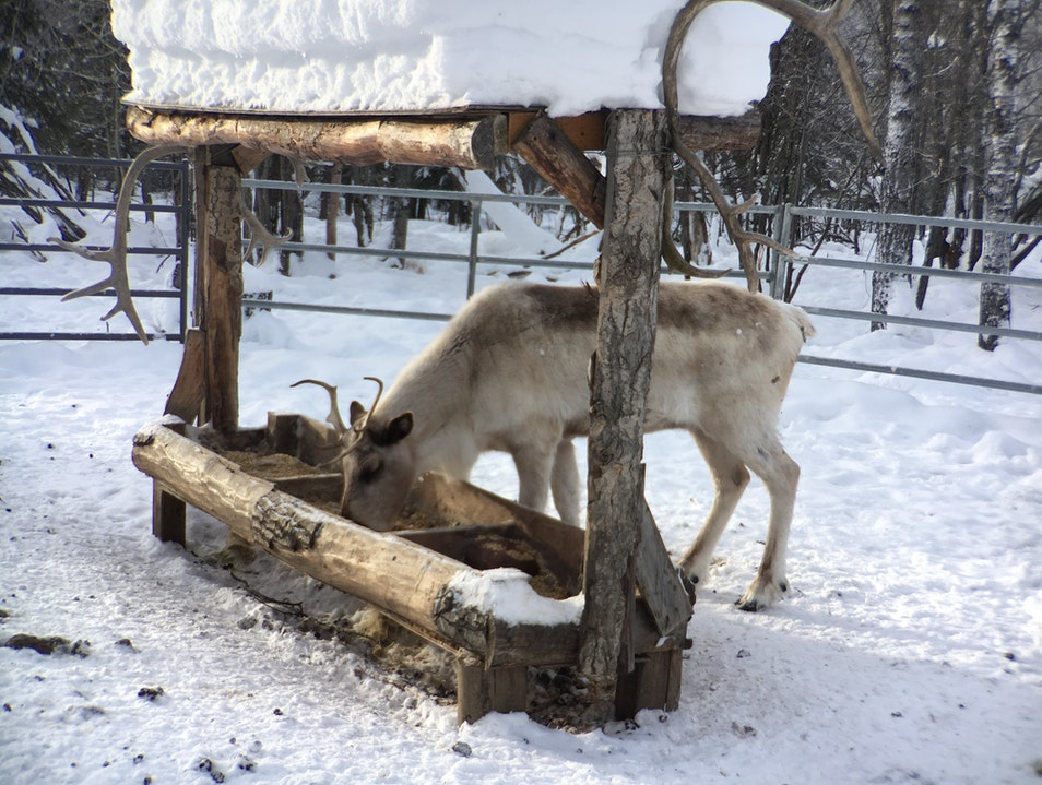 Visit the Animals at Chena Hot Springs Resort
