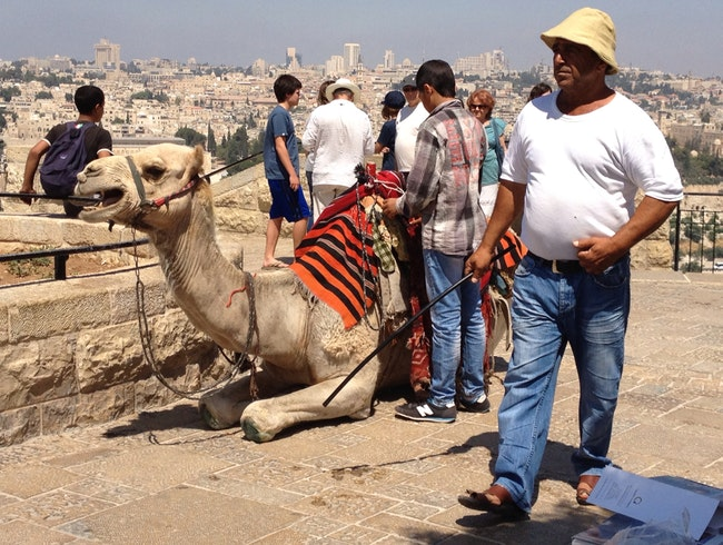 Camel Ride Through Jerusalem