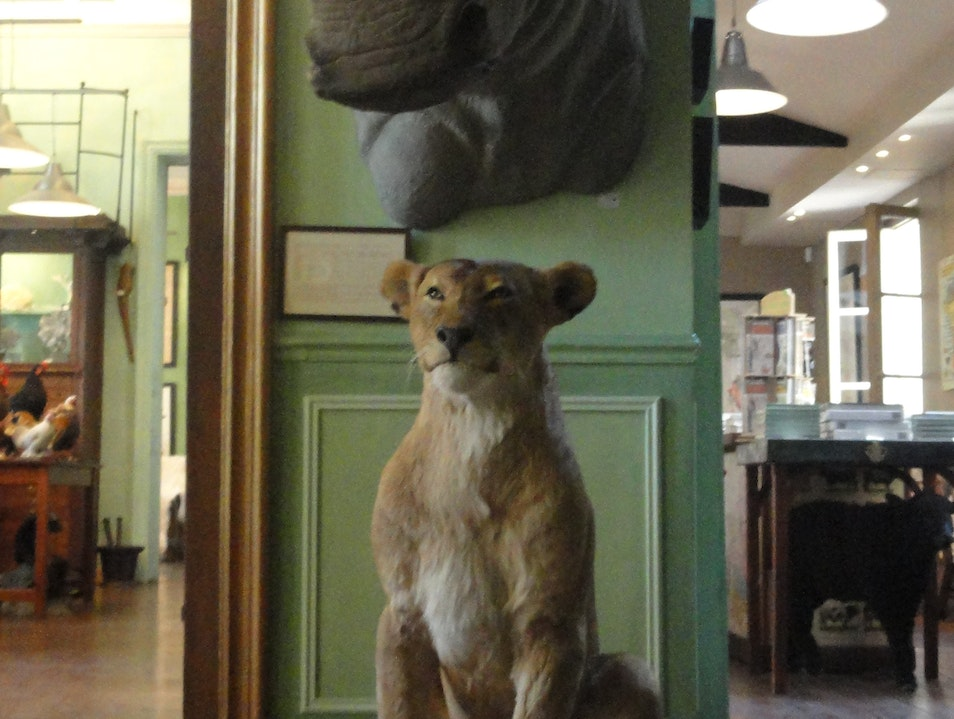 Tails of Taxidermy