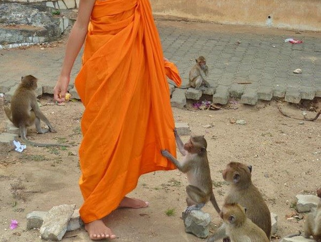 Young monk plays with monkeys...in Prachuap Khiri Khan, Thailand