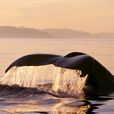 Whale-Watching along the Inside Passage